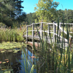 Hiking With Kids: The Rockery Loop Trail in Ipswich, MA