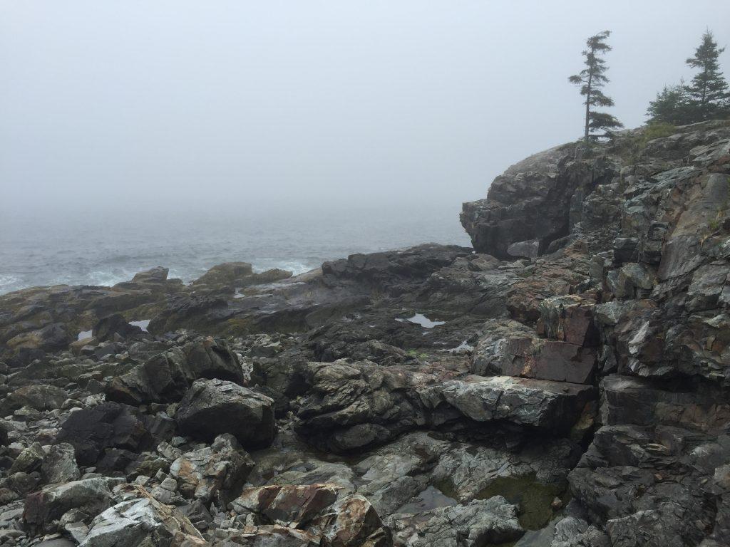 Acadia Tidal Pools