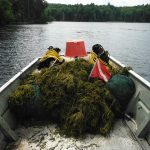 How to Stop Invasive Species from Hitchhiking with Your Boat