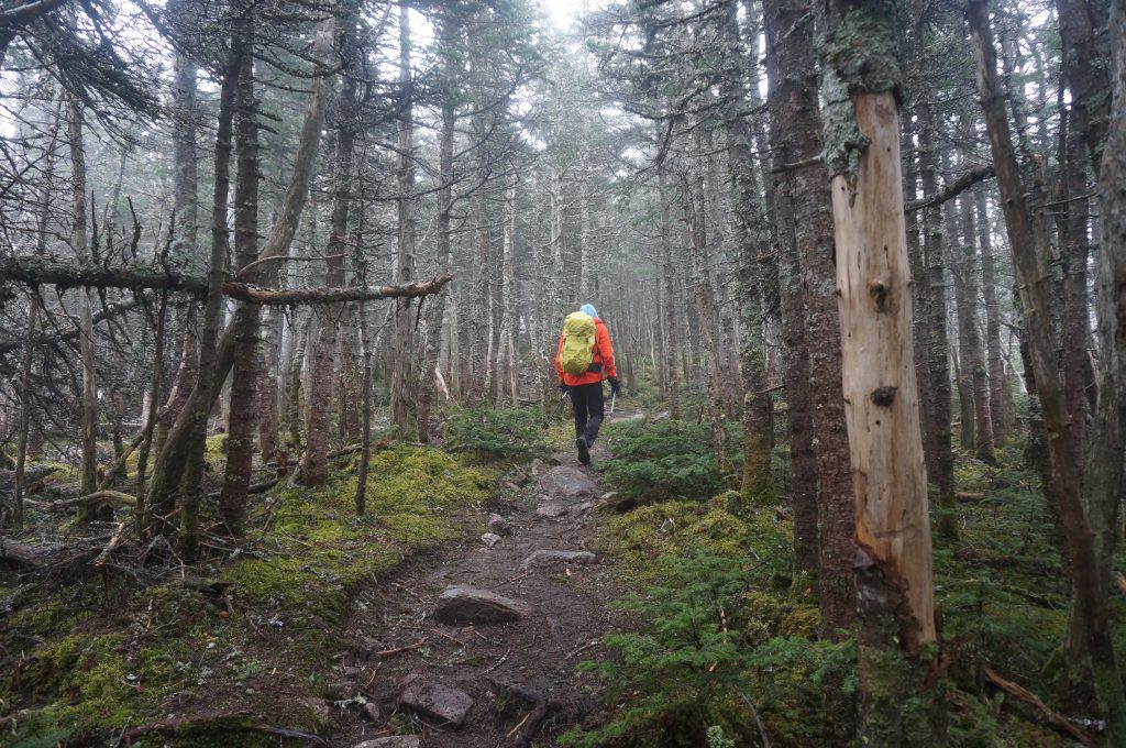 Descending the Bondcliff Trail.   Credit: Tim Peck