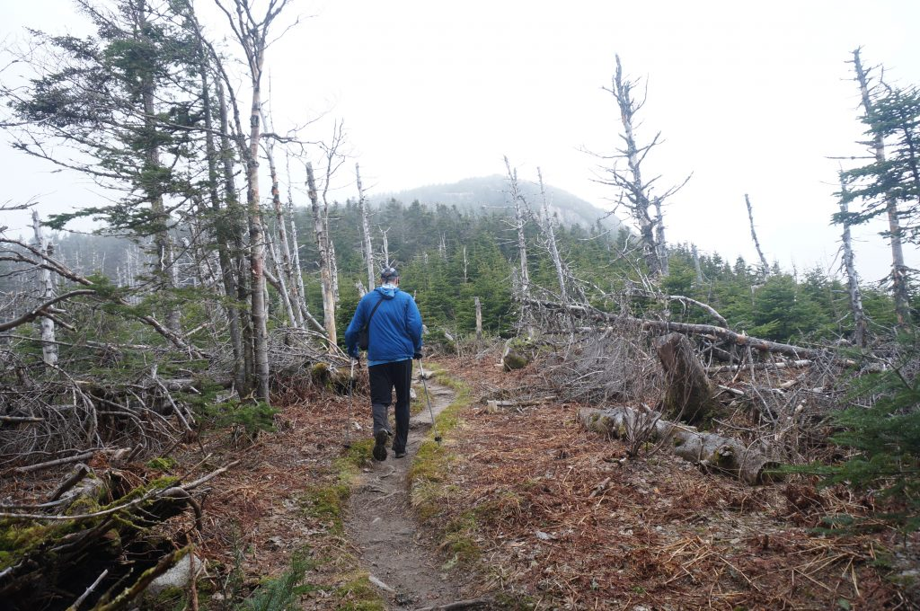 The spur trail to North Twin.   Credit: Tim Peck