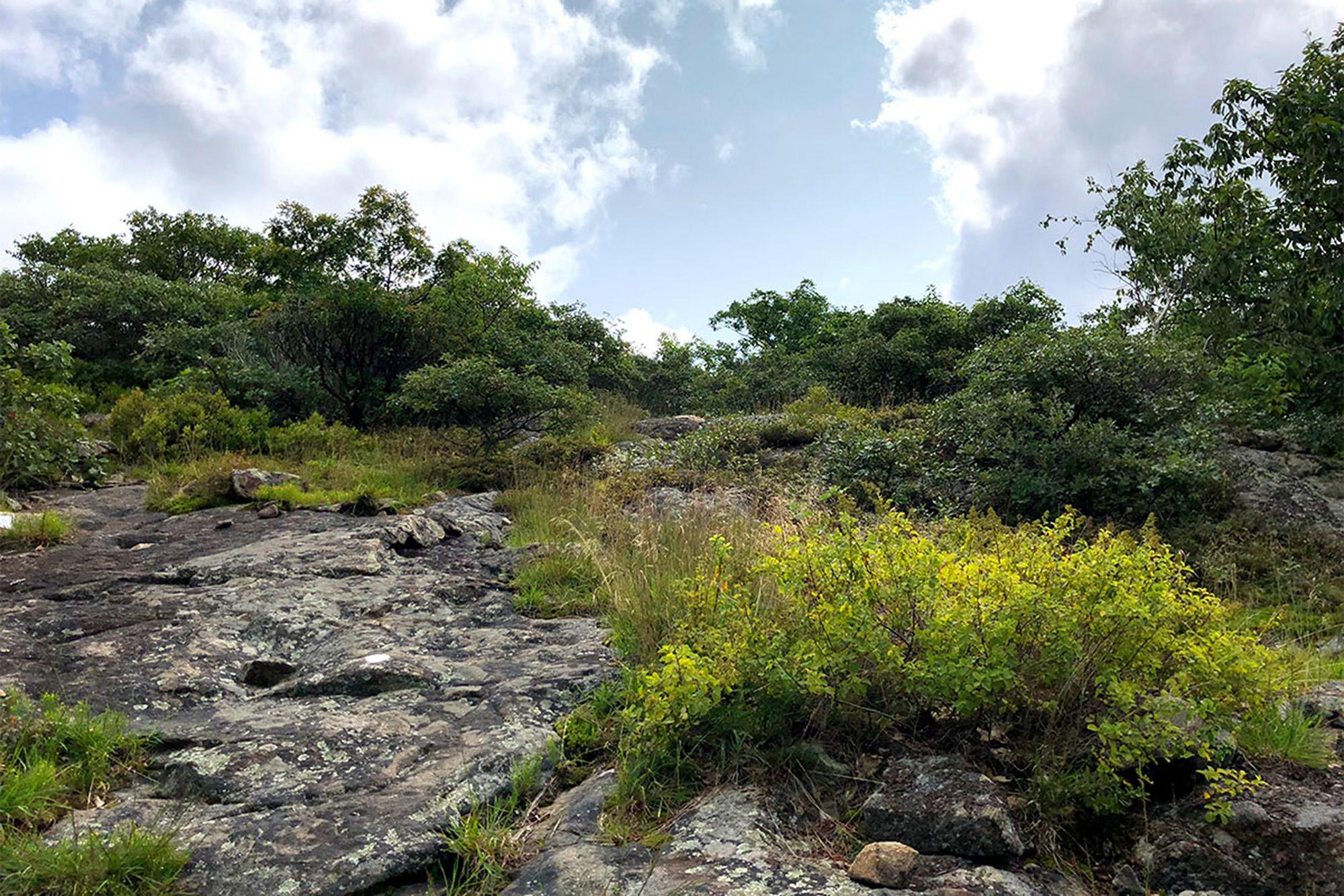 Approaching the summit of Lamb's Hill on the Fishkill Ridge Trail.   Credit: John Lepak