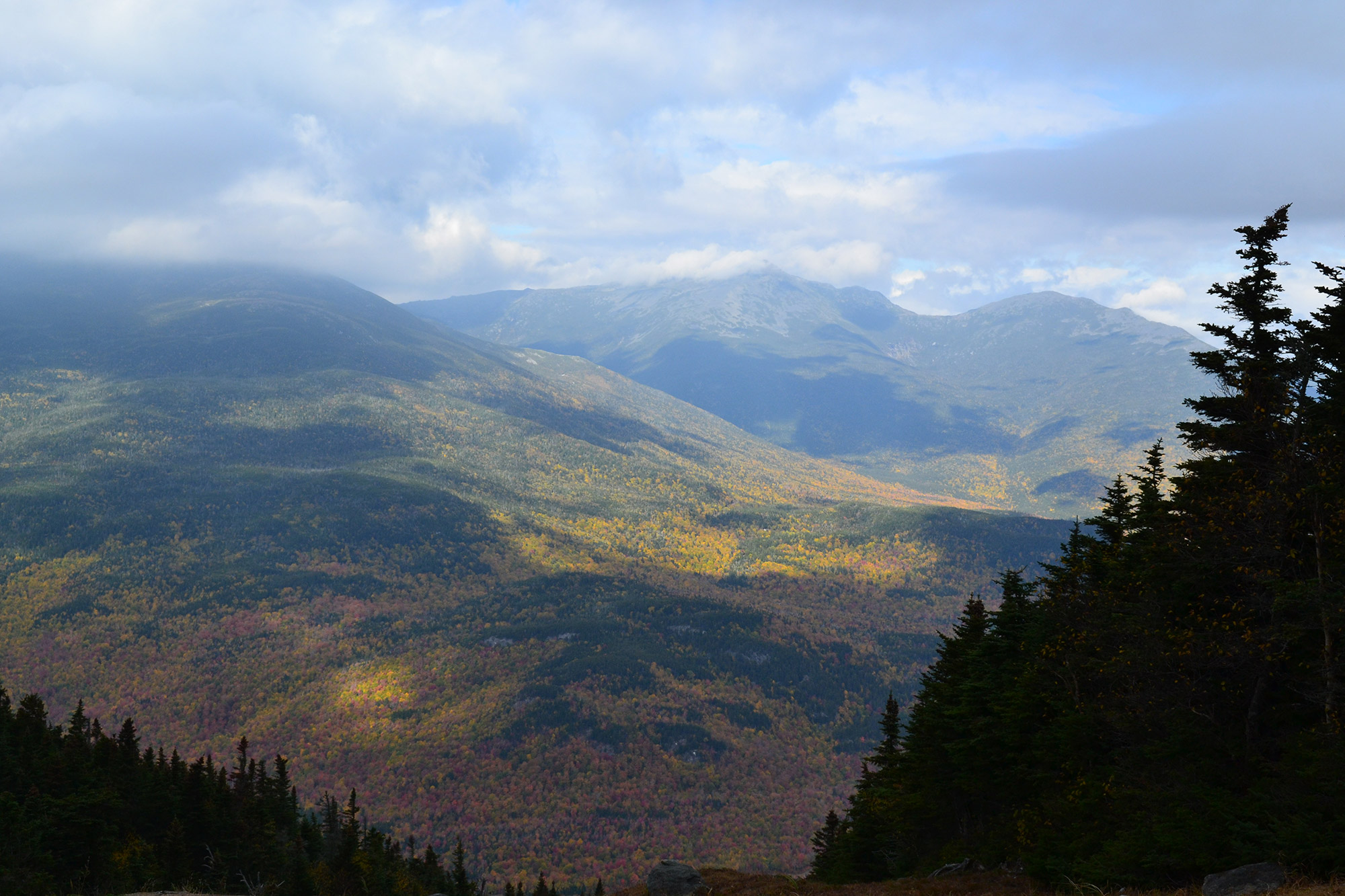 Foliage from near the top of Wildcat D.   Credit: Douglas Martland