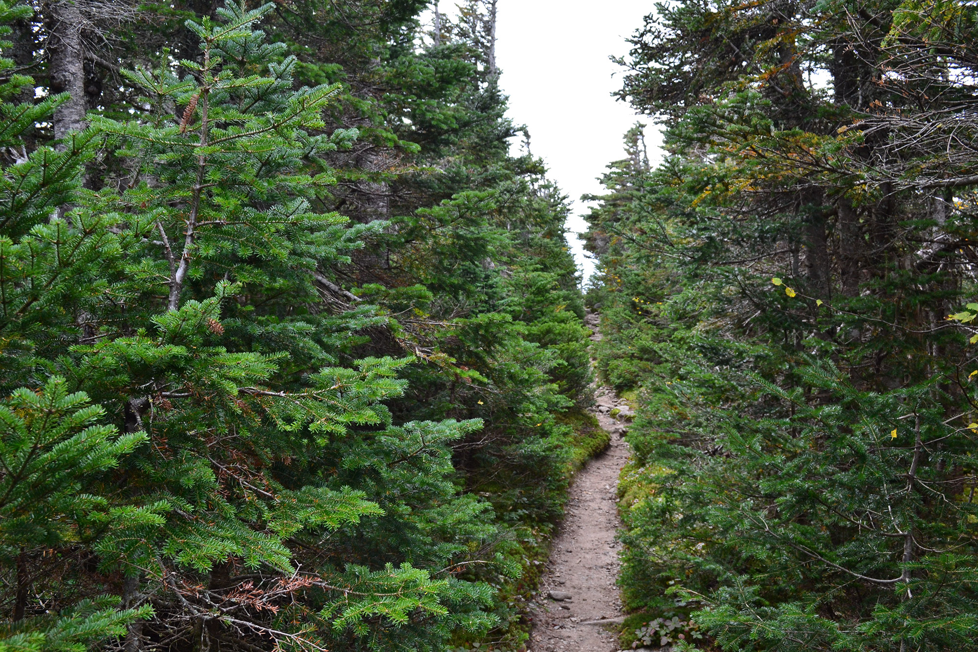 The trail approaching Carter Dome.   Credit: Douglas Martland