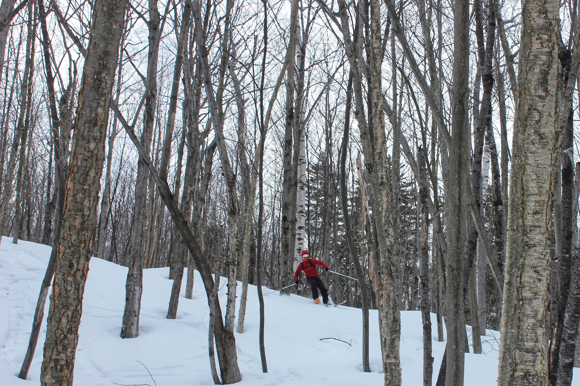 Skiing the trees on Bill Hill. | Credit: Tim Peck