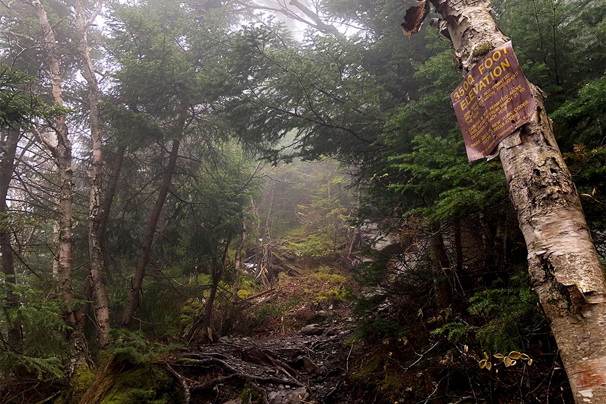 In the clouds at the 3500 foot sign, on the way up Twin Mountain. | Credit: John Lepak