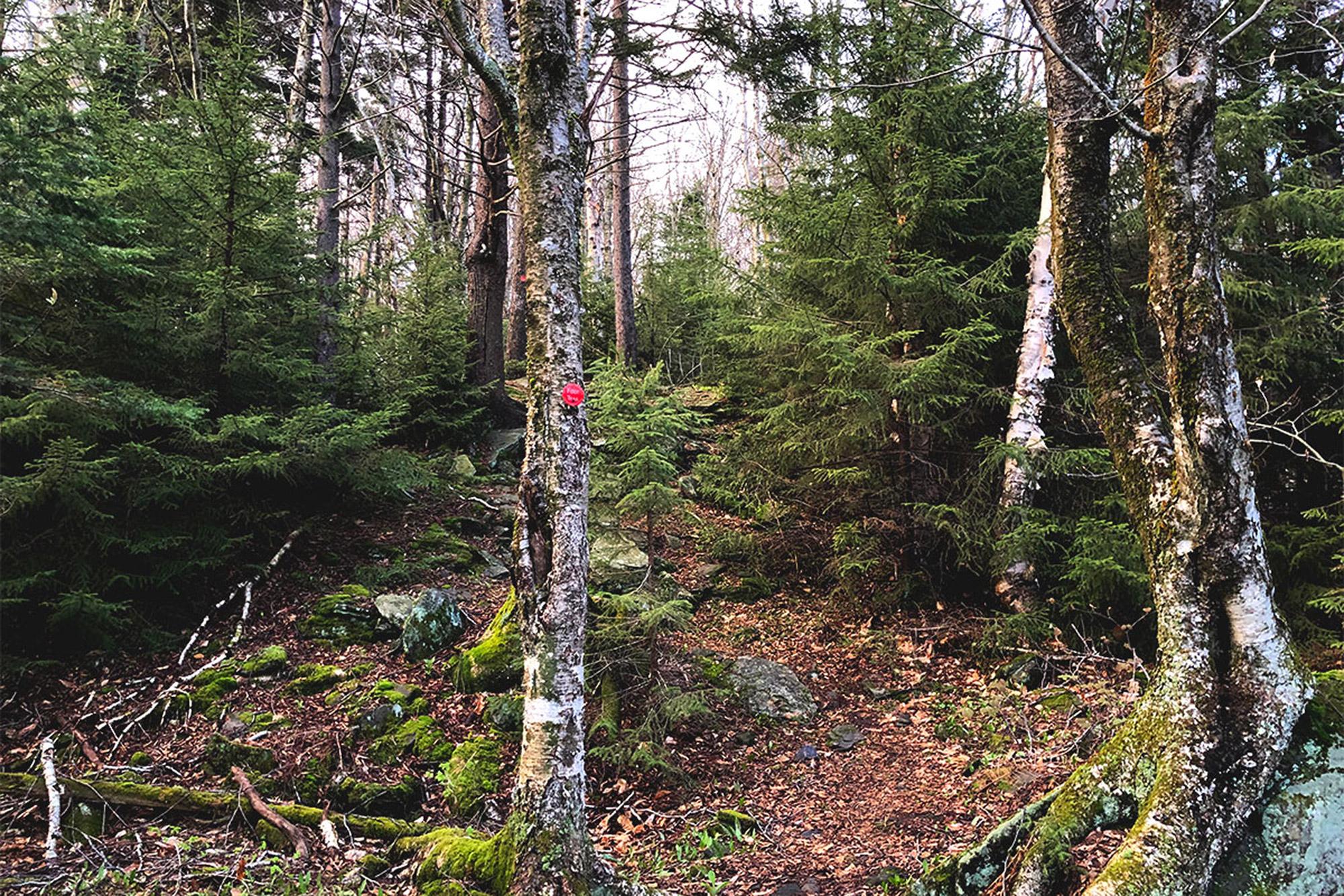 The Devil's Path as it climbs out of Stony Clove Notch.   Credit: John Lepak