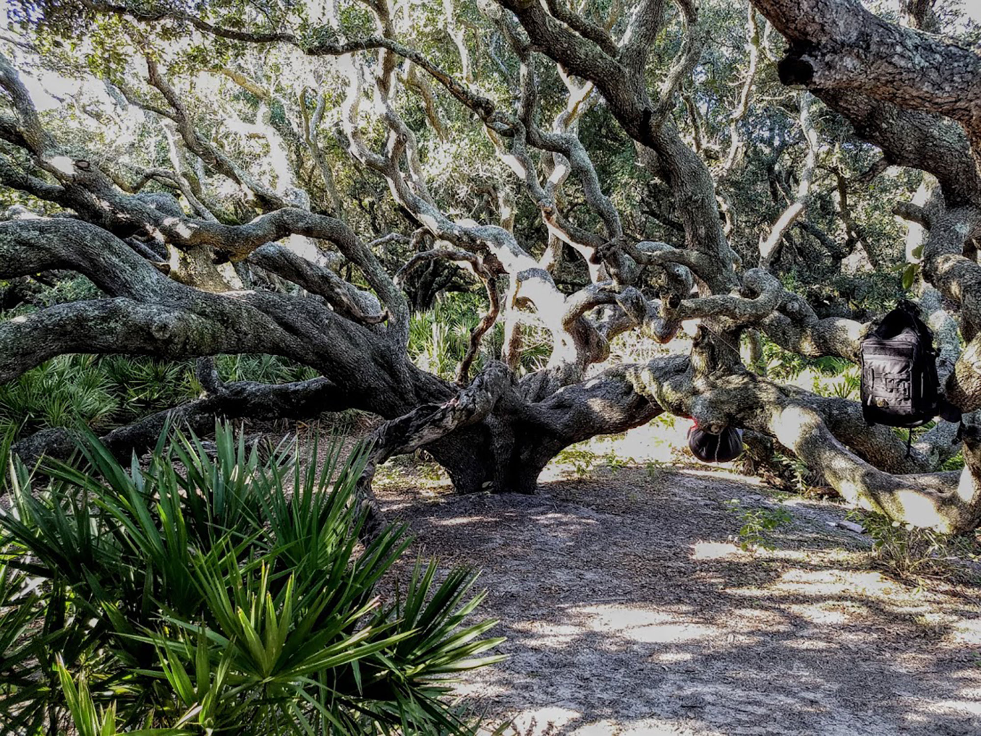 Cumberland Island's 50 miles of trails meander through pristine maritime forests under live oak canopies. Courtesy: Troy Allen Lair