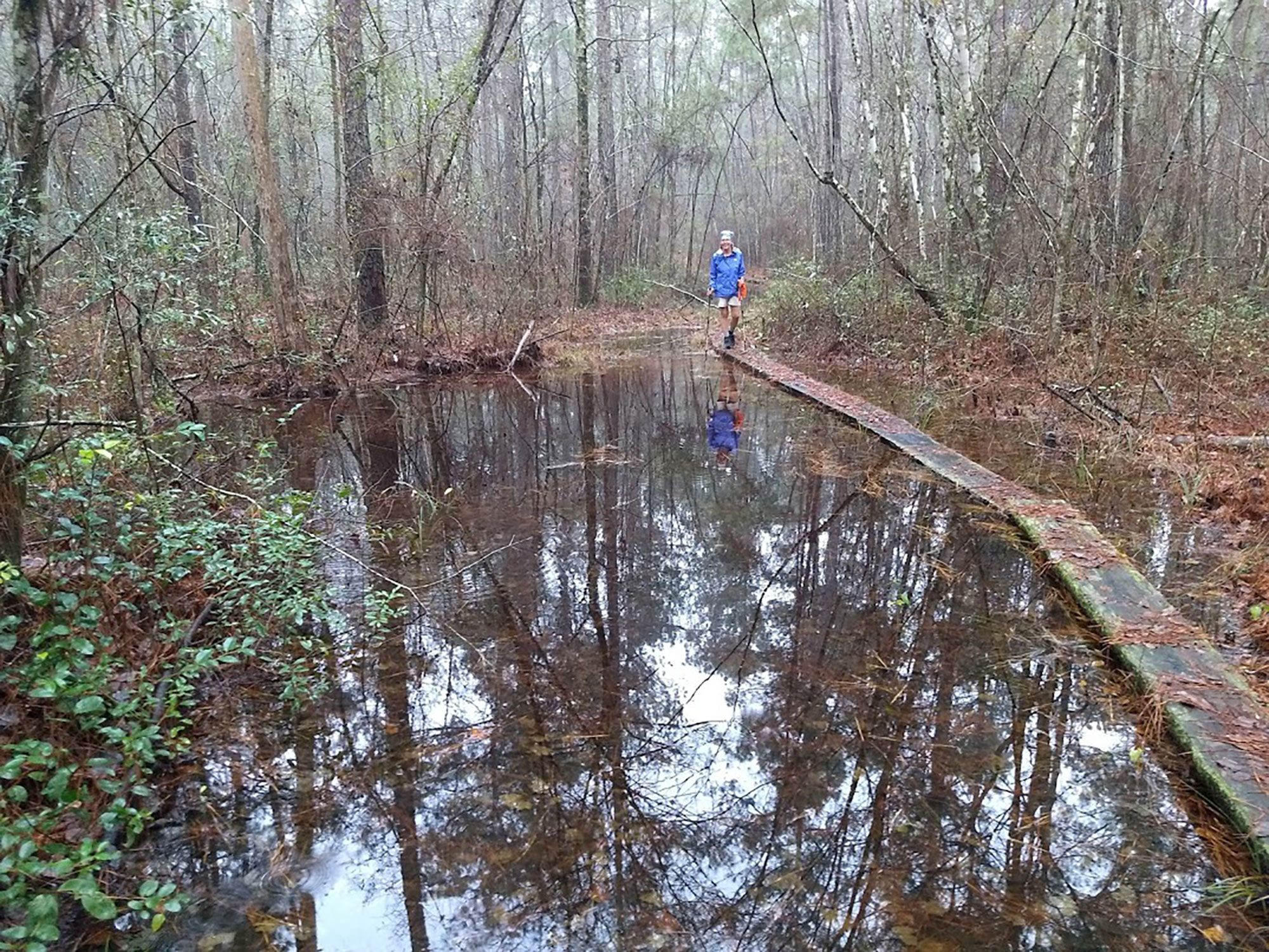 South Carolina's Palmetto Trail includes the mysterious Swamp Fox Passage, where you can expect to do a little wading through Wadboo and Dog Swamps. | Courtesy: Troy Allen Lair