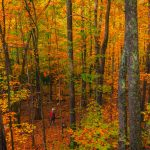 Fallen Leaves: How to Appreciate and Photograph Post-Peak Fall Color