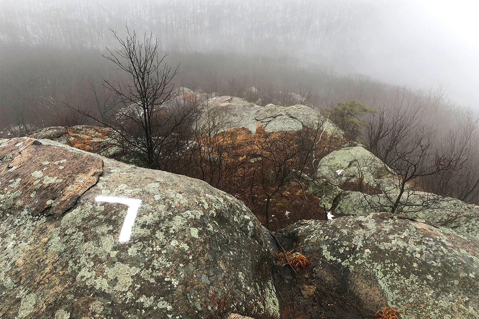 A foggy day in late fall, looking back over the Breakneck Ridge Trail.