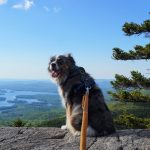 Doggie Decorum: Trail Etiquette for Hiking with Your Dog