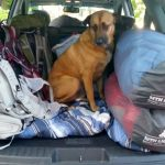 4 Tips for Camping and Hiking with Your Dog